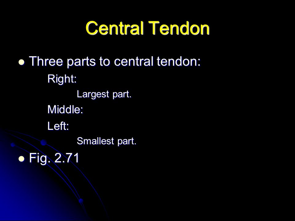 Central Tendon Three parts to central tendon: Fig. 2.71 Right: Middle: