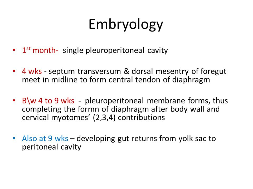 Embryology 1st month- single pleuroperitoneal cavity