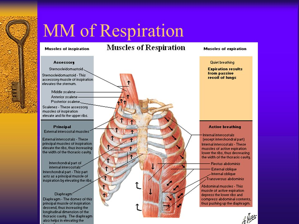 MM of Respiration