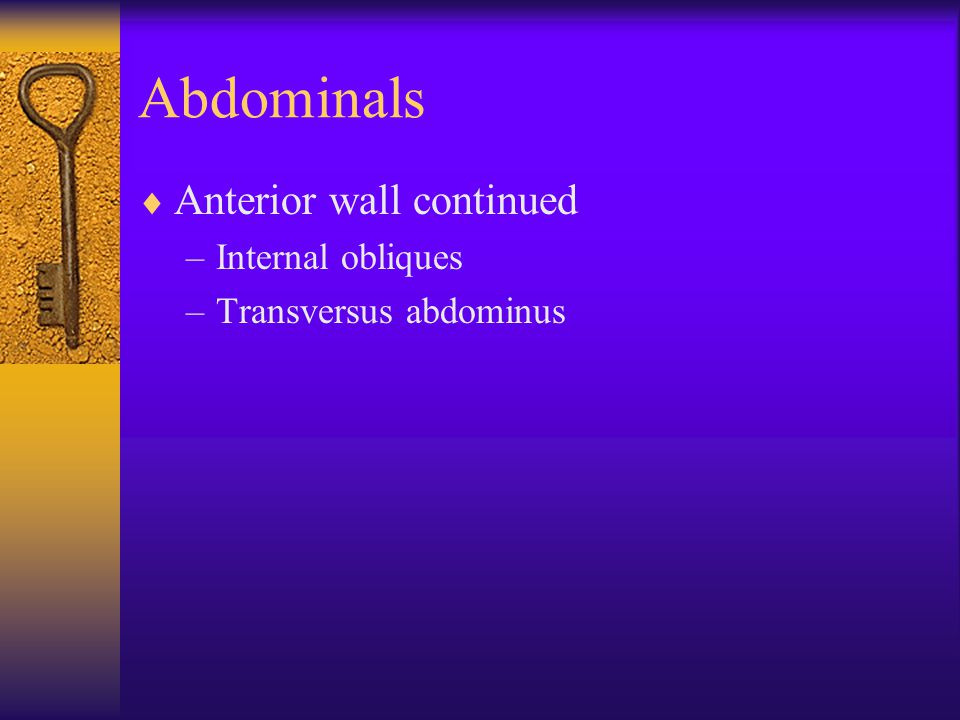 Abdominals Anterior wall continued Internal obliques