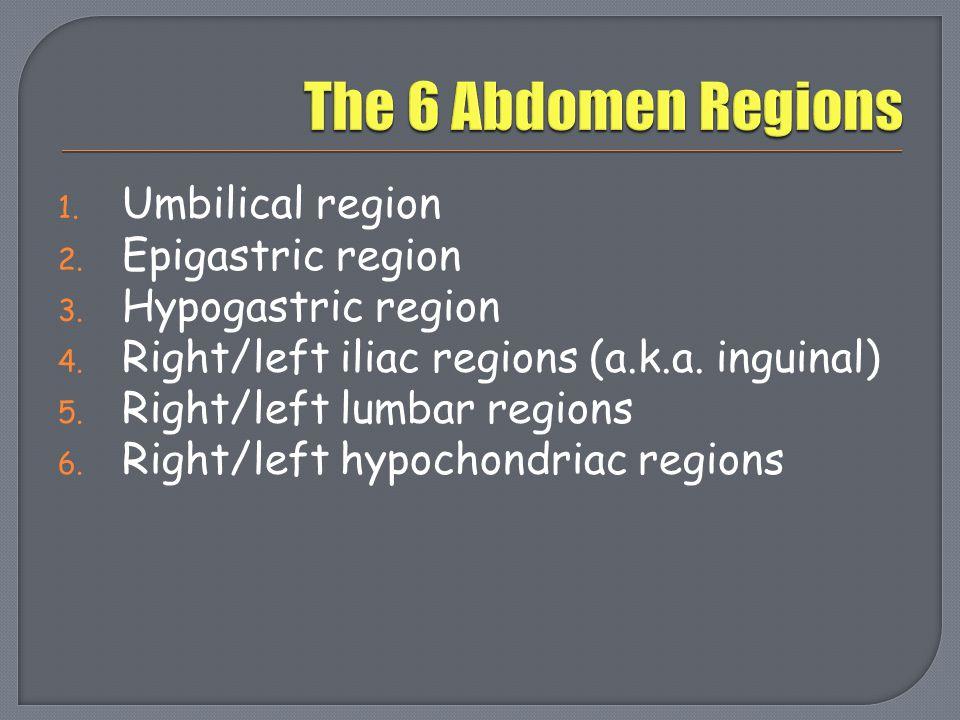 The 6 Abdomen Regions Umbilical region Epigastric region