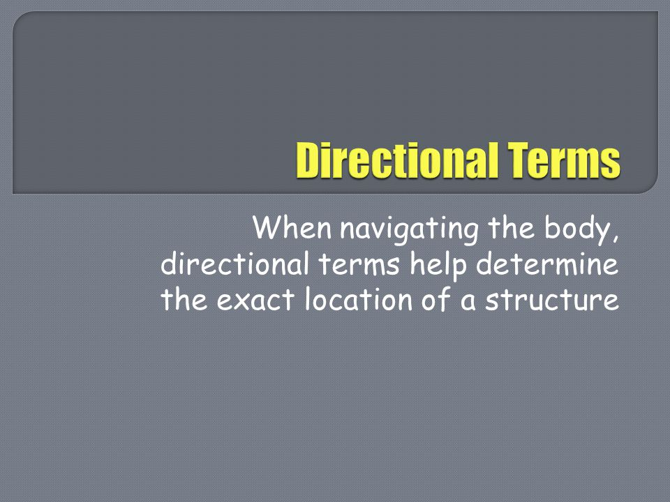 Directional Terms When navigating the body, directional terms help determine the exact location of a structure.