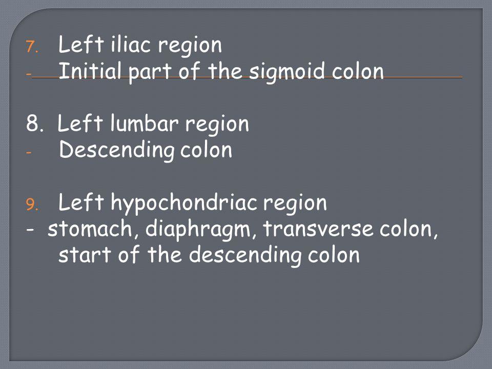 Left iliac region Initial part of the sigmoid colon. 8. Left lumbar region. Descending colon. Left hypochondriac region.