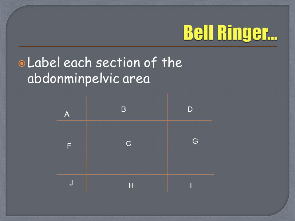 Bell Ringer… Label each section of the abdonminpelvic area B D A G C F
