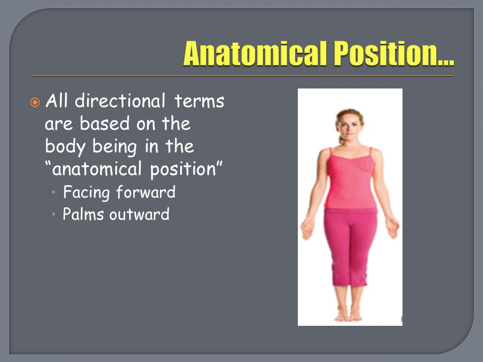 Anatomical Position… All directional terms are based on the body being in the anatomical position