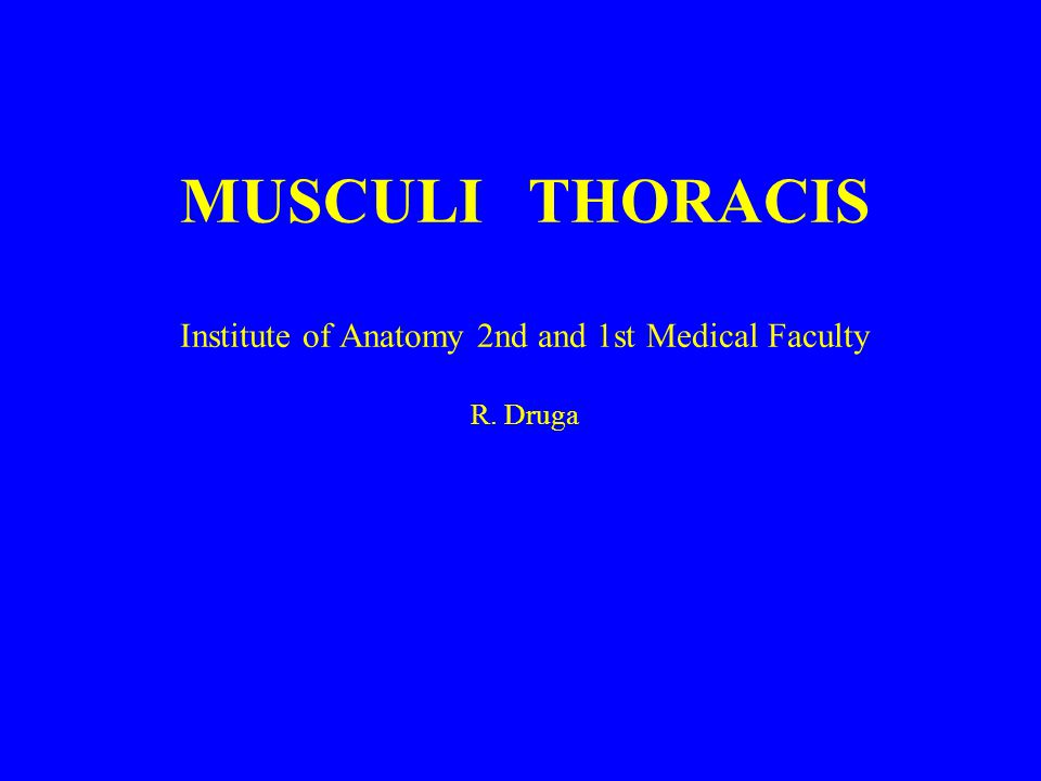 MUSCULI THORACIS Institute of Anatomy 2nd and 1st Medical Faculty R