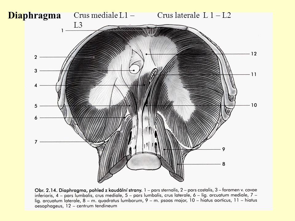 Ziemlich Laterale Nasenwand Anatomie Zeitgenössisch - Anatomie Von ...