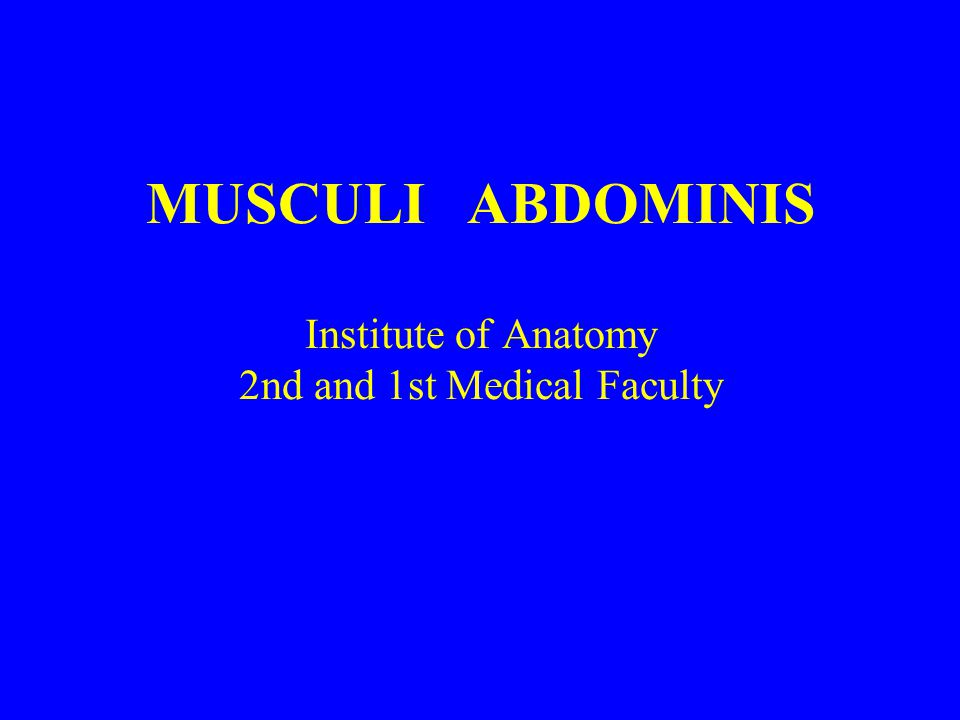 MUSCULI ABDOMINIS Institute of Anatomy 2nd and 1st Medical Faculty