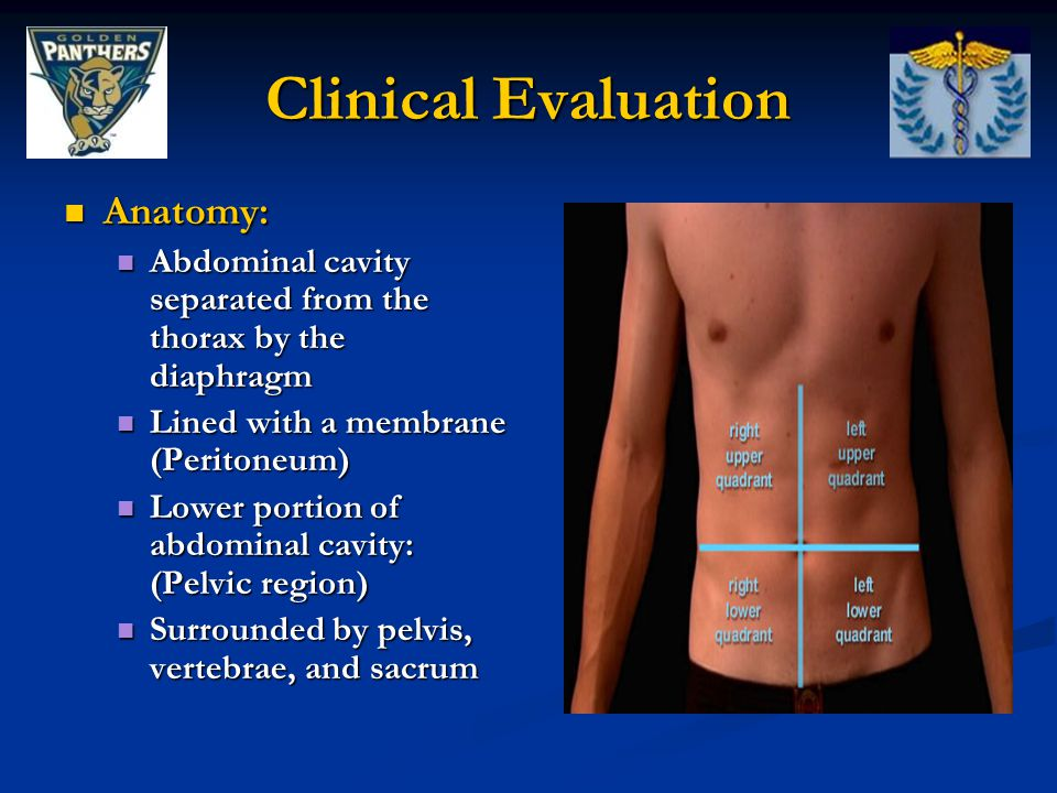 Clinical Evaluation Anatomy:
