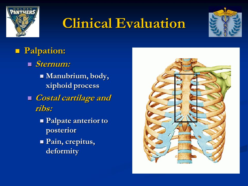 Clinical Evaluation Palpation: Sternum: Costal cartilage and ribs: