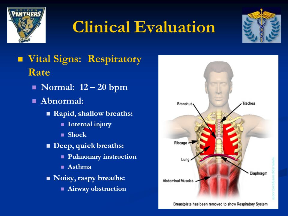 Clinical Evaluation Vital Signs: Respiratory Rate Normal: 12 – 20 bpm