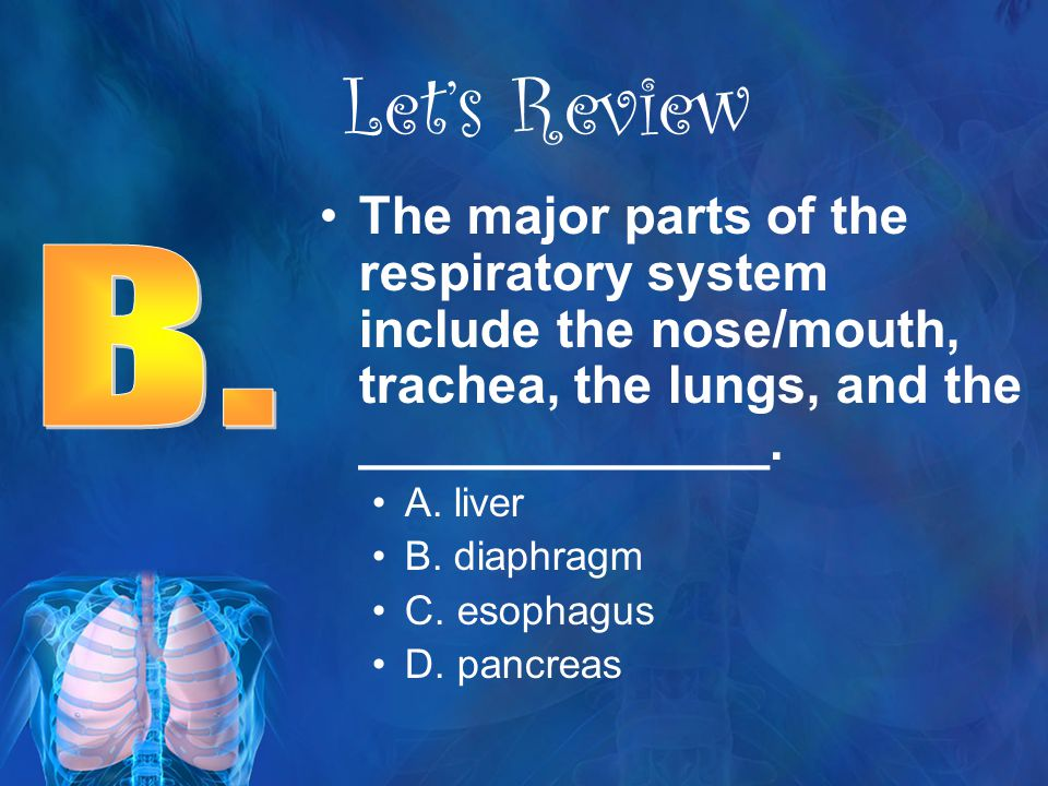 Let's Review The major parts of the respiratory system include the nose/mouth, trachea, the lungs, and the ______________.
