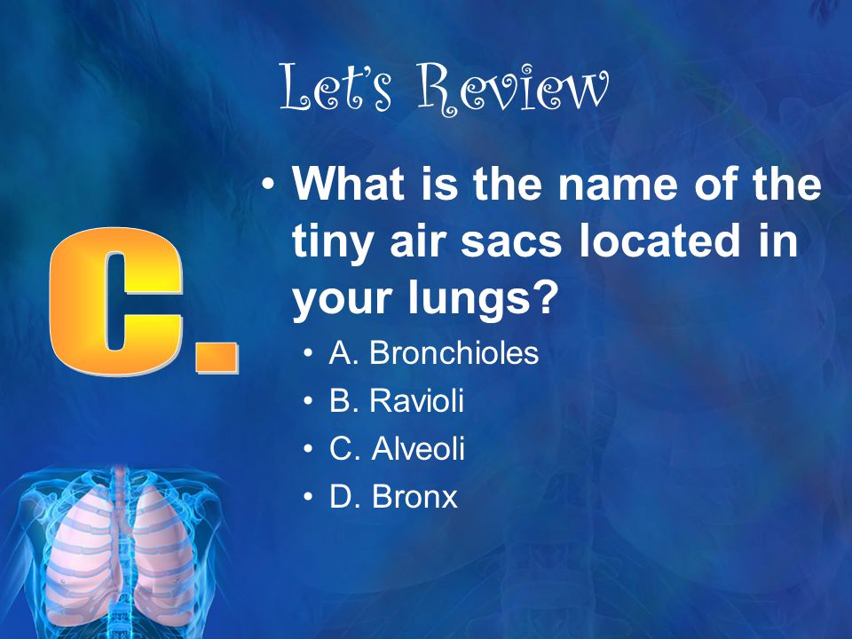 Let's Review What is the name of the tiny air sacs located in your lungs A. Bronchioles. B. Ravioli.