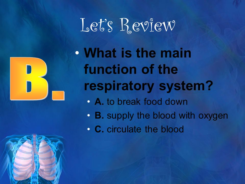 Let's Review What is the main function of the respiratory system B.