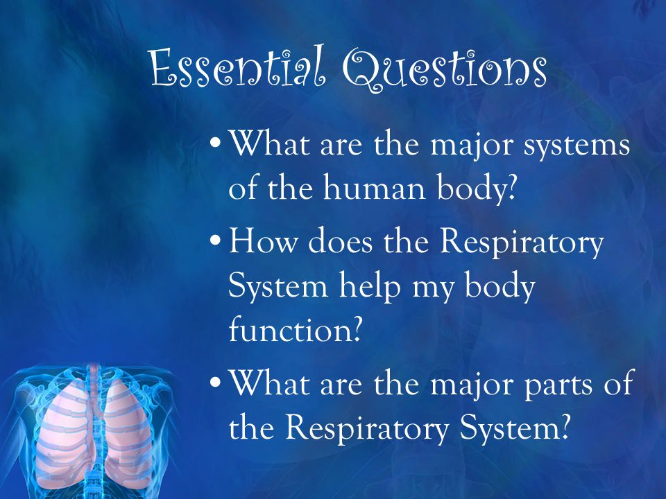 Essential Questions What are the major systems of the human body