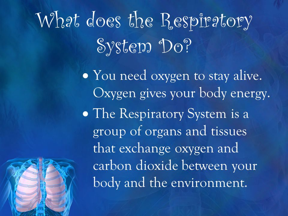 What does the Respiratory System Do