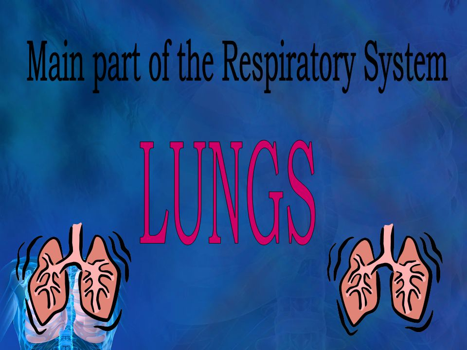 Main part of the Respiratory System