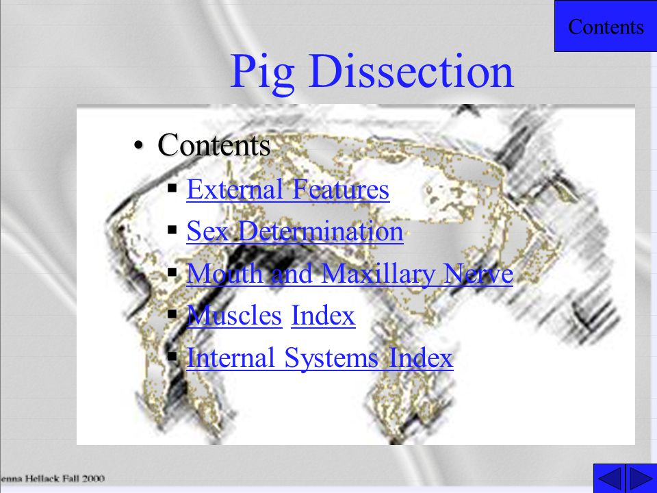 Pig Dissection Contents External Features Sex Determination