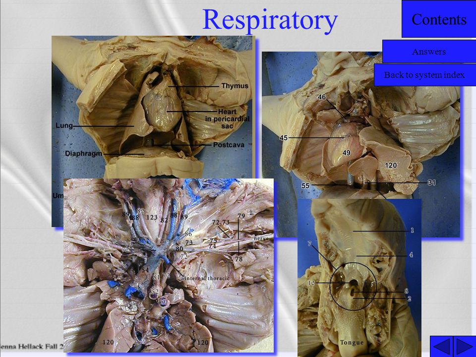Respiratory Answers Back to system index