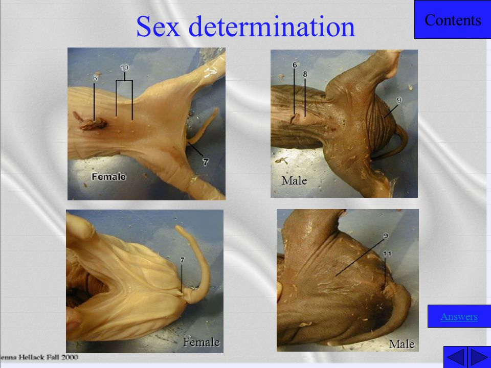 Sex determination Male Female Male Answers