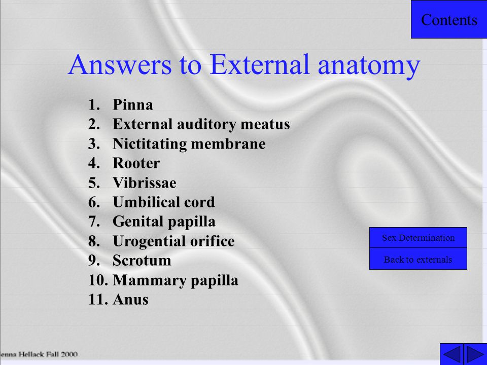 Answers to External anatomy