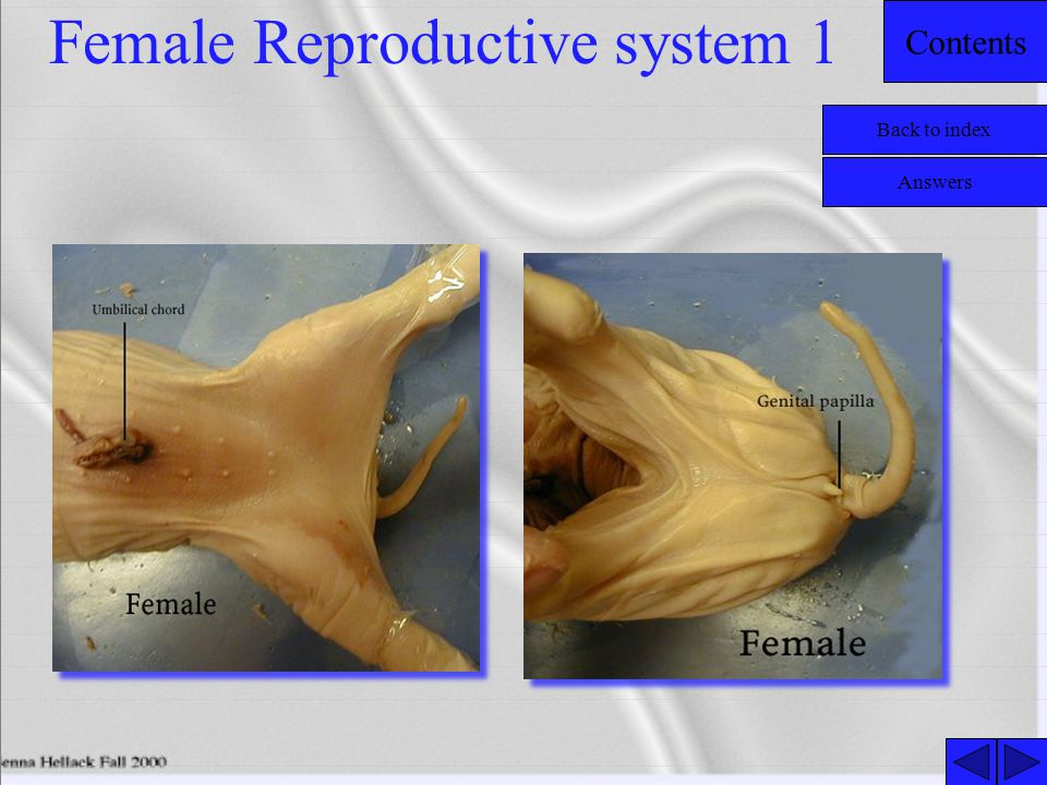 Female Reproductive system 1