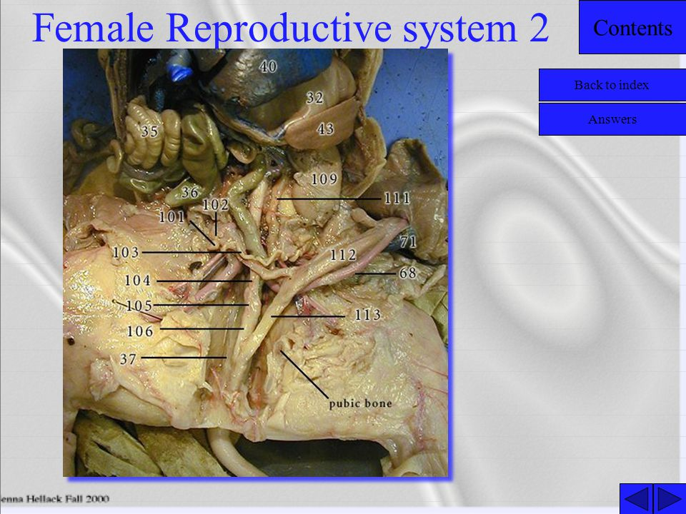 Female Reproductive system 2