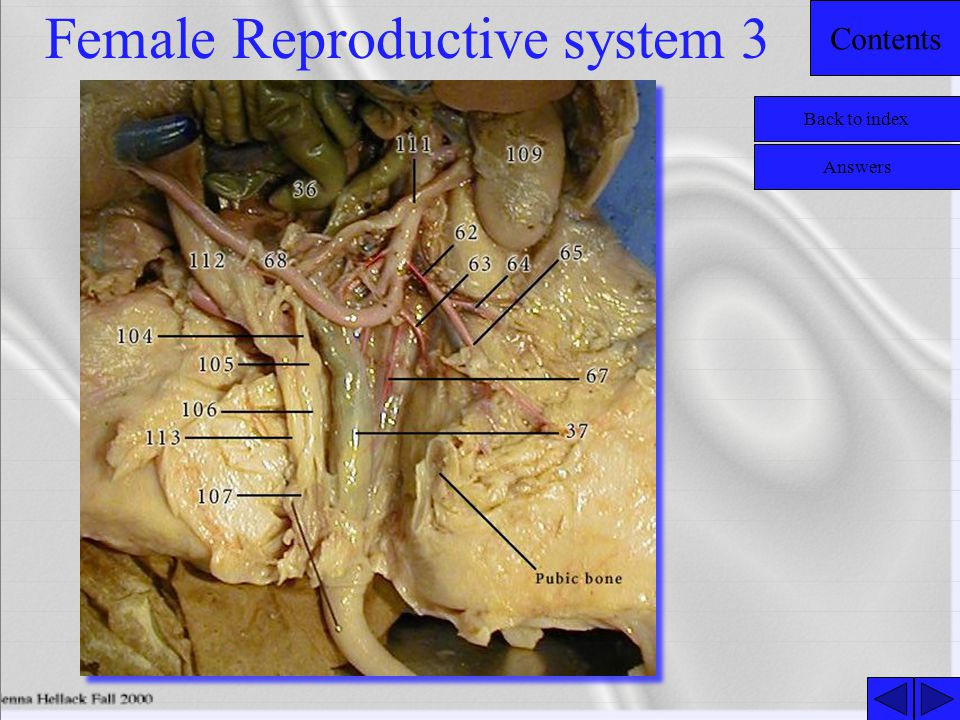 Female Reproductive system 3
