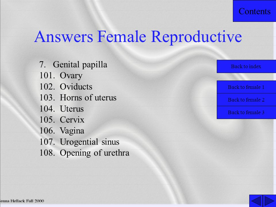 Answers Female Reproductive