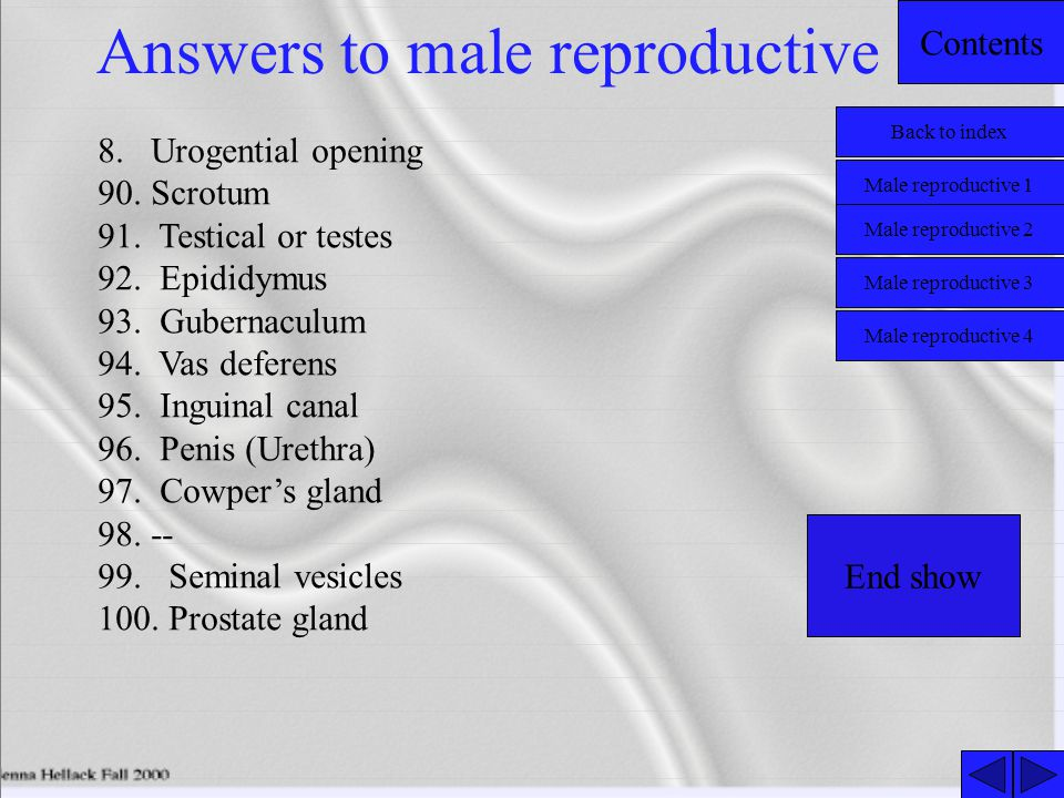 Answers to male reproductive