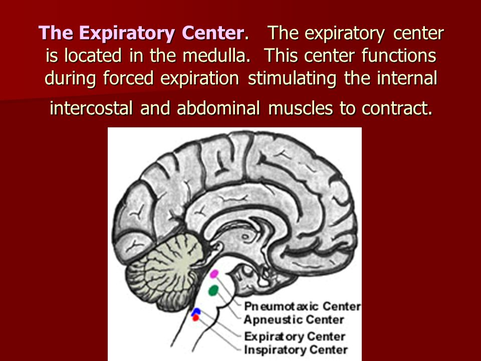 The Expiratory Center. The expiratory center is located in the medulla