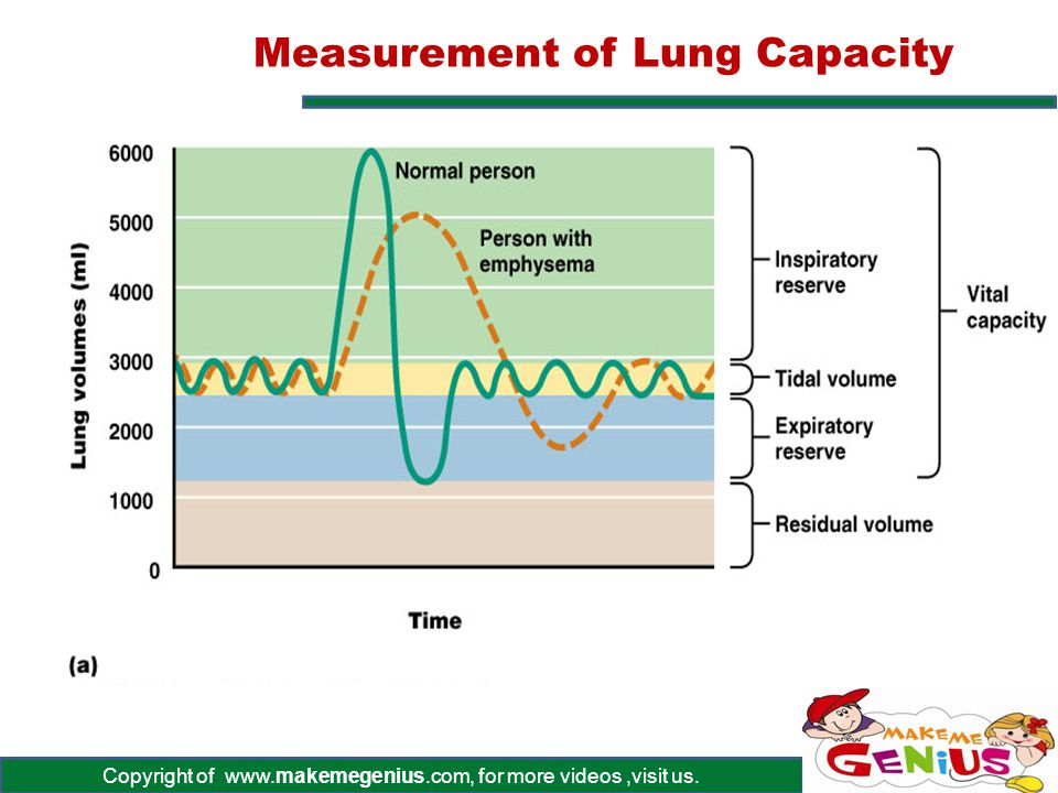 Measurement of Lung Capacity