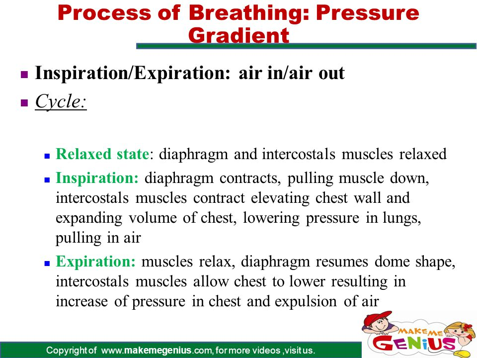 Process of Breathing: Pressure Gradient