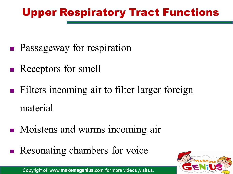 Upper Respiratory Tract Functions