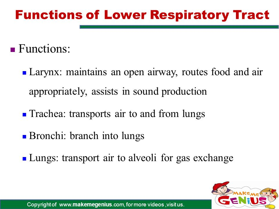 Functions of Lower Respiratory Tract
