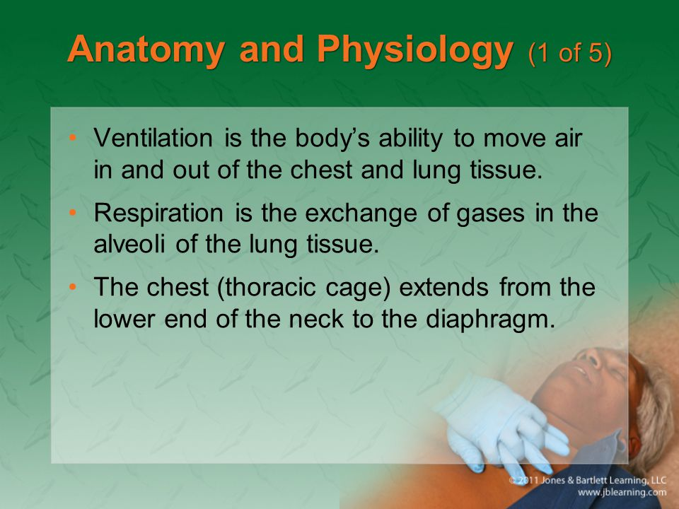 Anatomy and Physiology (1 of 5)