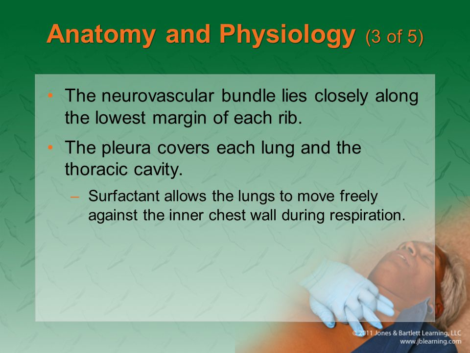 Anatomy and Physiology (3 of 5)