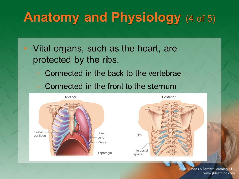Anatomy and Physiology (4 of 5)