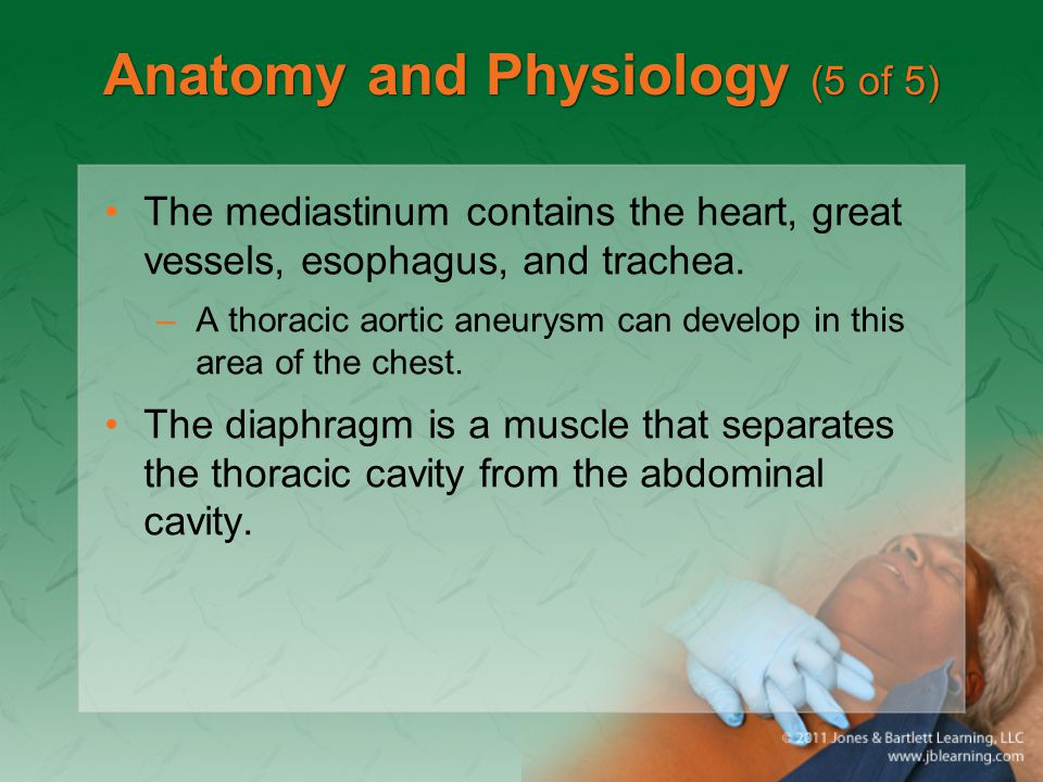 Anatomy and Physiology (5 of 5)