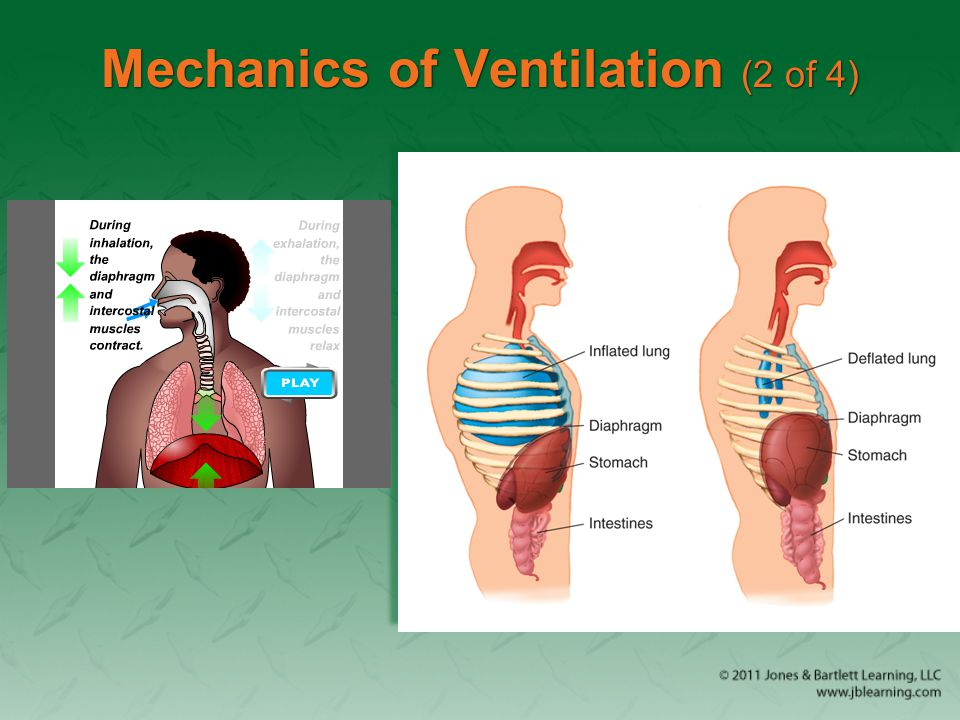 Mechanics of Ventilation (2 of 4)