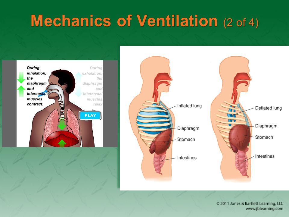 Mechanics of Ventilation (2 of 4)