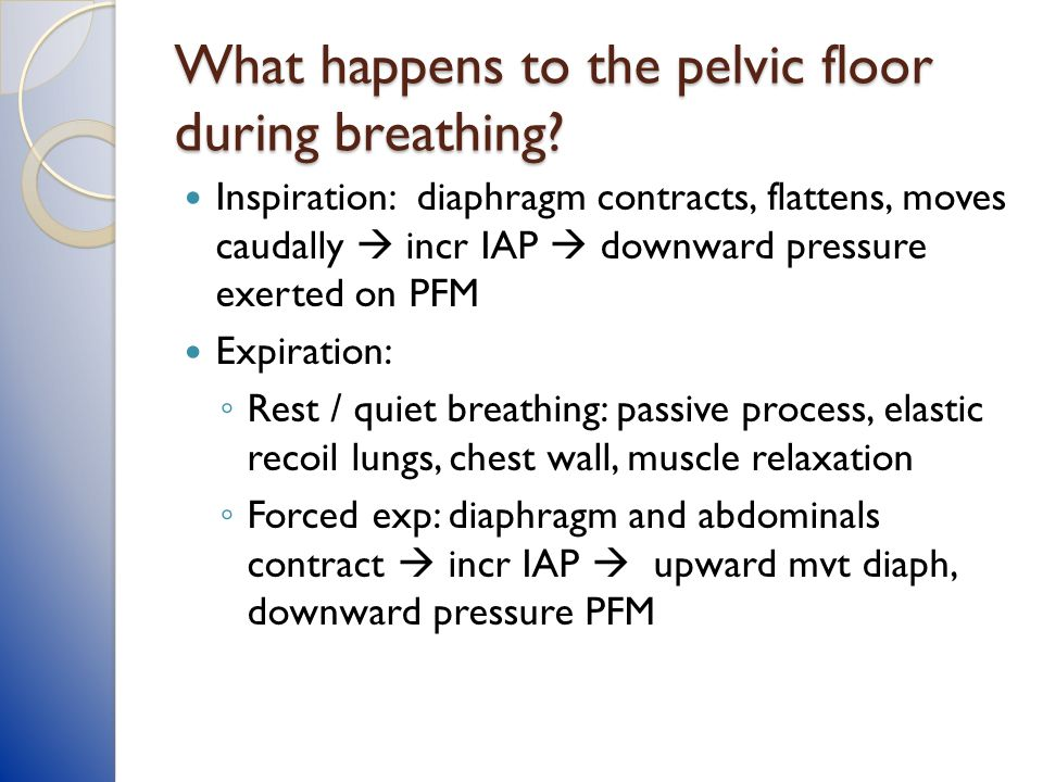 What happens to the pelvic floor during breathing