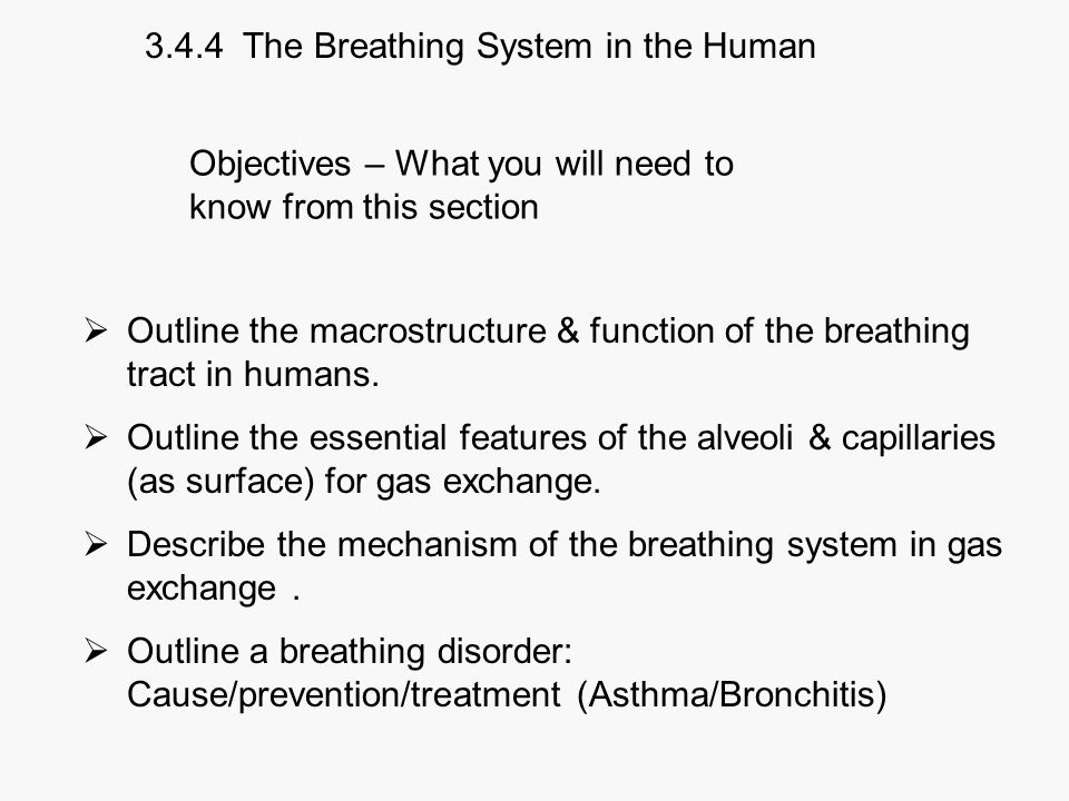 3.4.4 The Breathing System in the Human