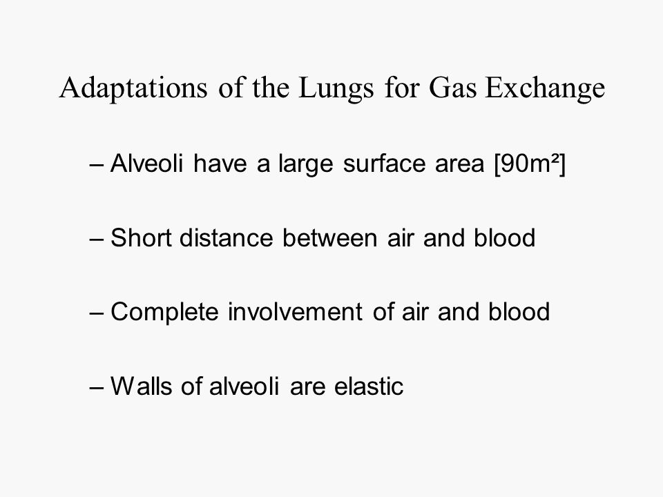 Adaptations of the Lungs for Gas Exchange