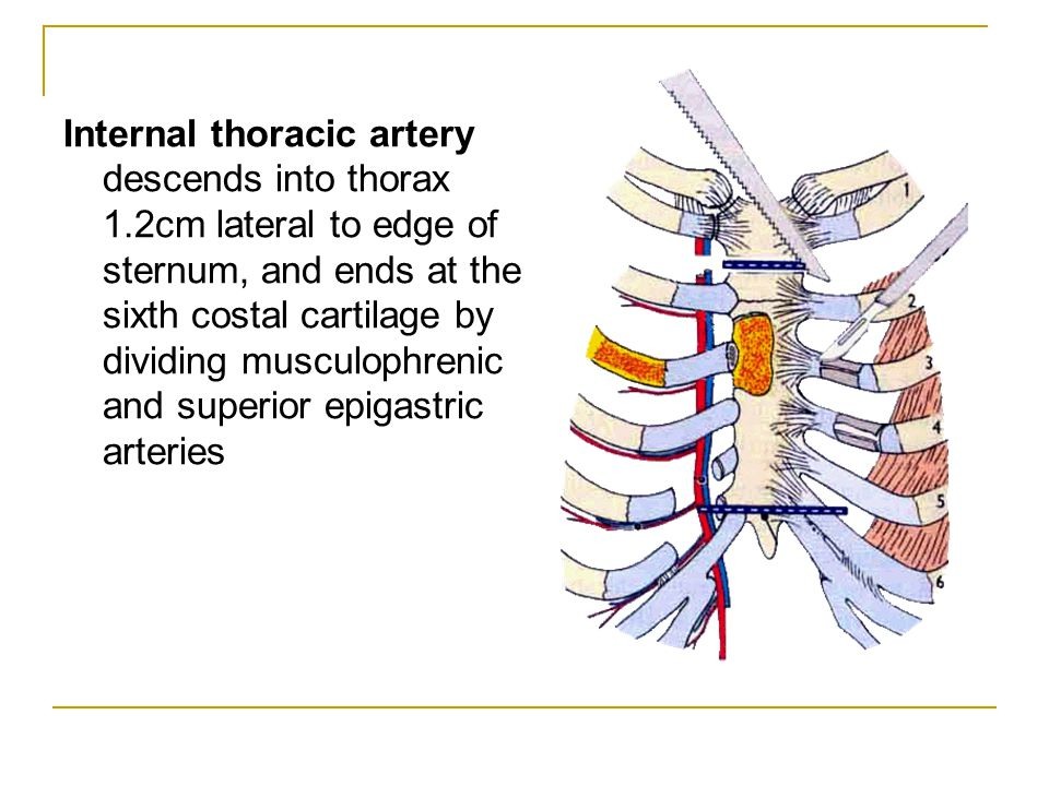 Internal thoracic artery descends into thorax 1