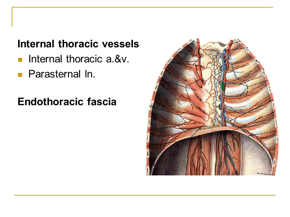 Internal thoracic vessels