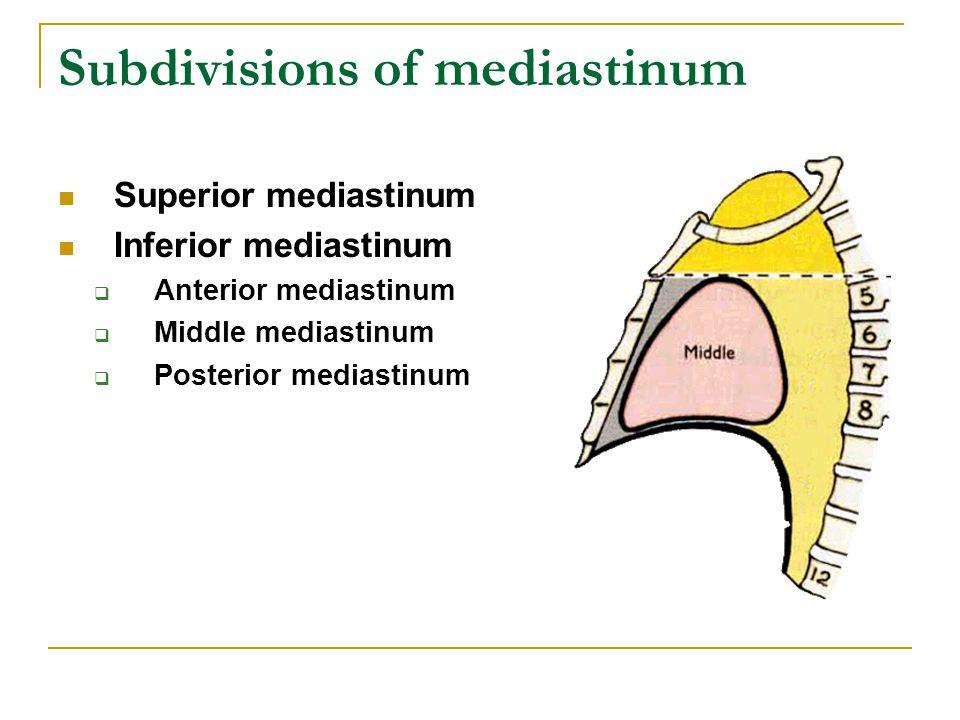 Subdivisions of mediastinum