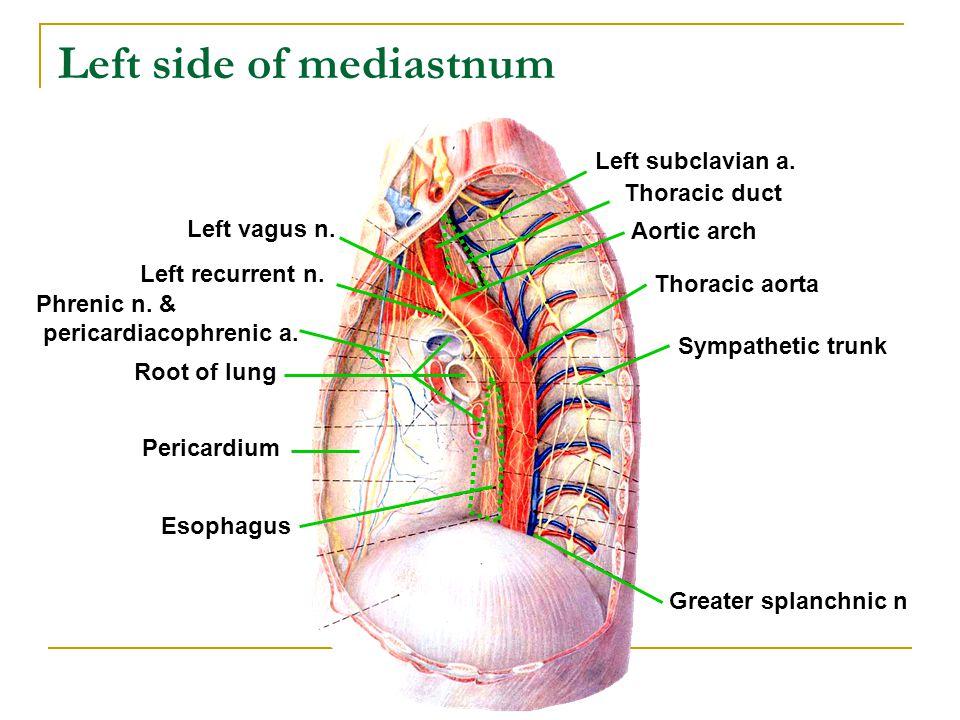 Left side of mediastnum