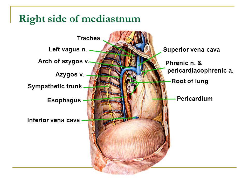 Right side of mediastnum