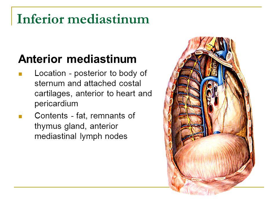 Inferior mediastinum Anterior mediastinum